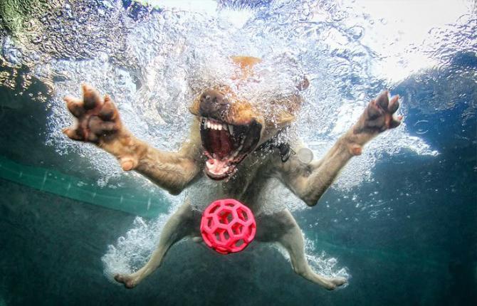 Kutyafotók víz alatt