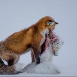 Gázos a BBC Wildlife Photographer of the Year díjazott fotója