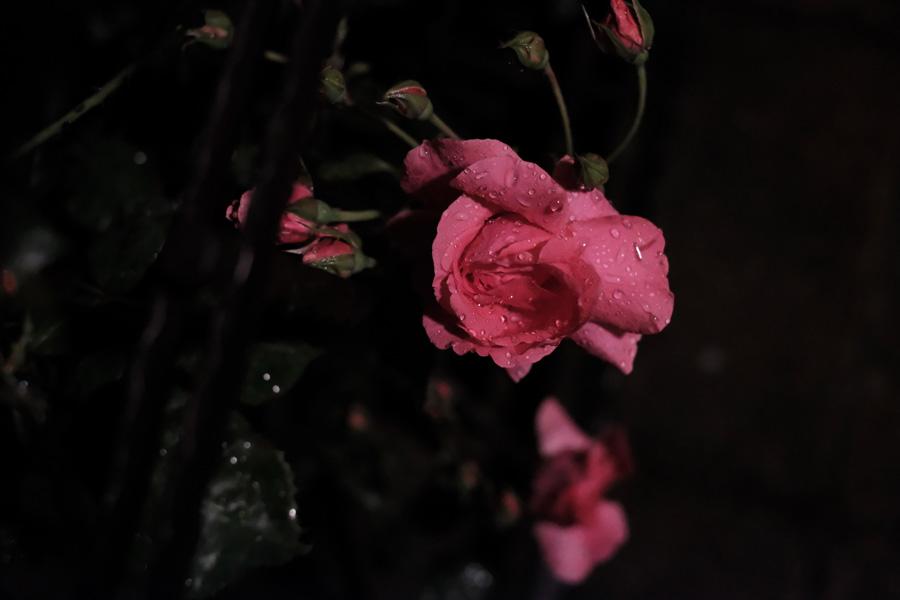35mm f/1.4, ISO12.800