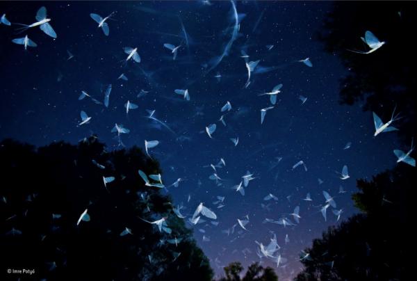 Fotó: Potyó Imre - A felugró oldalon érdemes a Lightbox gombra kattintani, így teljes képernyőn láthatók az alkotások