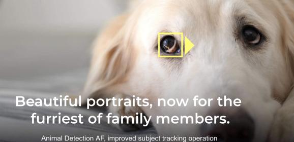 Nikon Z-re is megérkezett az Animal Eye-AF